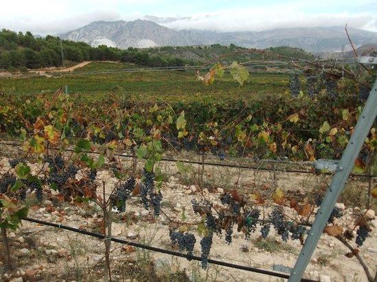 Hacienda Senorio de Nevada : Vineyard and mountains