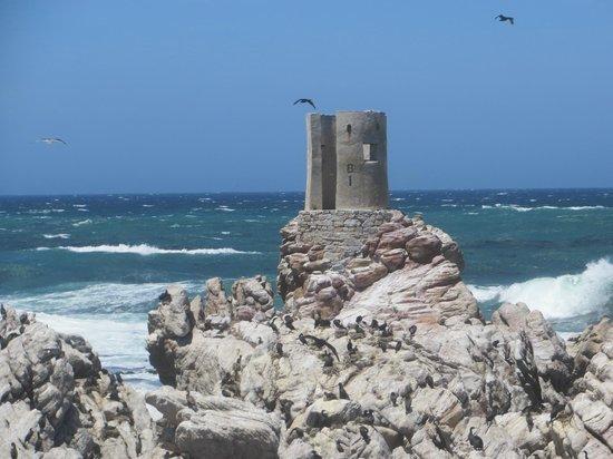 Stony Point Penguin Colony: fabulous setting
