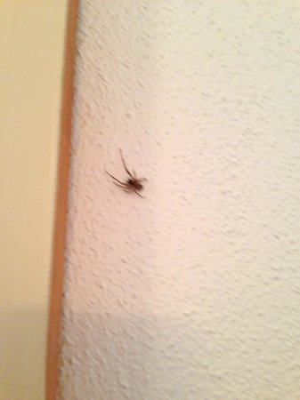 Leenane Hotel: An example of only one of our house guests, no fear of spiders but should not be there.