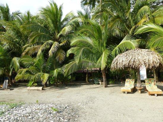 Fenix Hotel - On The Beach: Vista desde la playa
