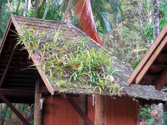 Bloomfield Lodge: Dachbewuchs