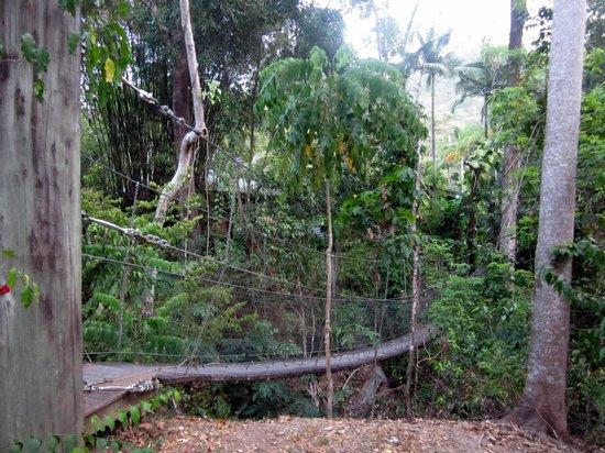 Bloomfield Lodge: Hängebrücke vom Hauptgebäude zu den Bungalows