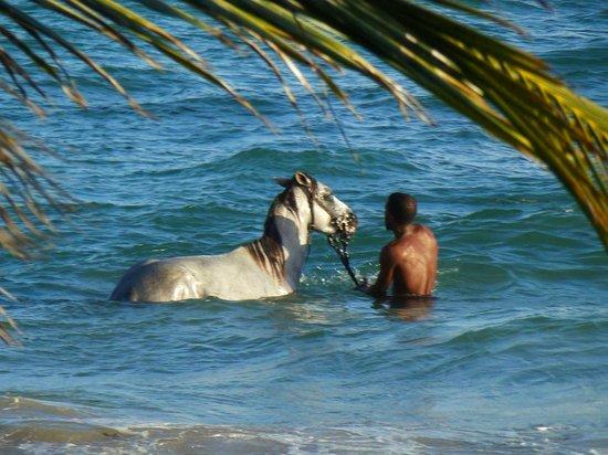Sandy Beach: Badevergnügen Pferd und Reiter