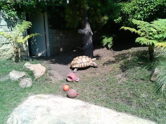 Junior Museum & Zoo: huge