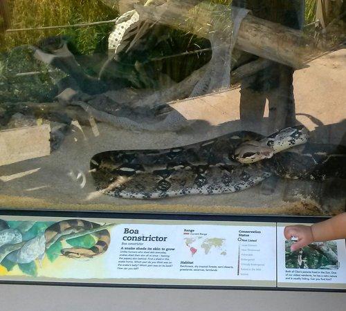 Junior Museum & Zoo: ...