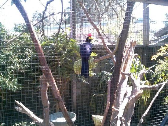 Junior Museum & Zoo: birdie,
