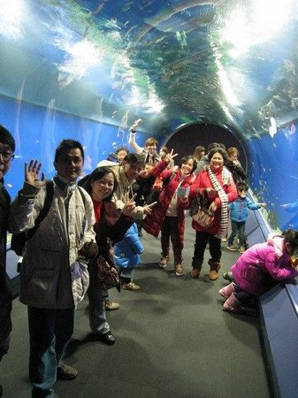 All Star Osaka Walk: Aquarium Kaiyukan