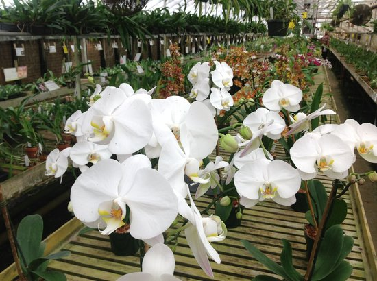 Newberry, SC: Carter and Holmes- the largest orchid distributor in North America