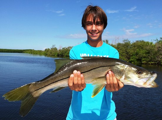 Tampa bay snook fotograf a de tampa fishing charters for Fishing charters tampa