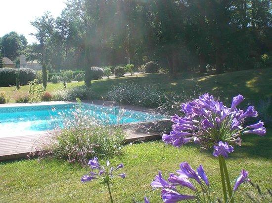 La Lilas des Fargues : Le jardin et la piscine