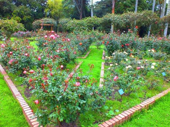 Collection Of Tropicial Plants Picture Of Jardin Botanico De Bogota Jose Celestino Mutis