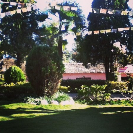 Himalayan Yoga Academy and Retreat: The nice garden