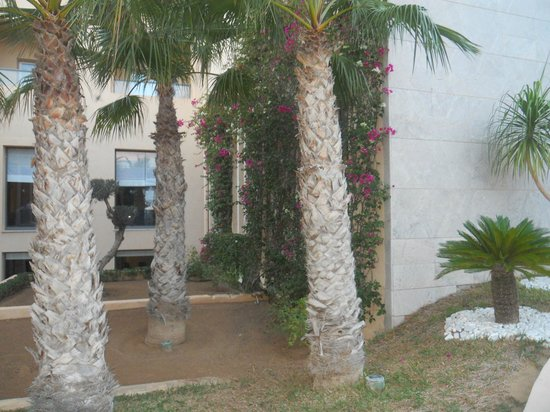 SENTIDO Rosa Beach : The sound of 'Bird Song' in the afternoon in the hotel garden