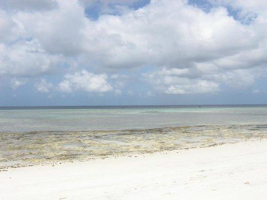 The Manta Resort: Beach at low tide