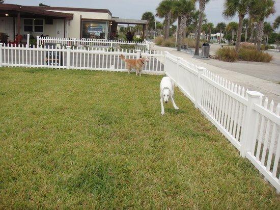 Vilano Beach Garden Inn : Pearl and Chrissy enjoyed the dog yard.