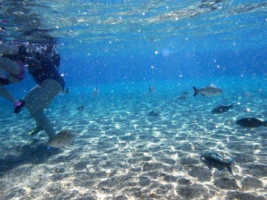 Sharks Bay Umbi Diving Village: fish