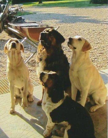 Château de La Prévôté : Les chiens des propriétaires et ceux de leur fils