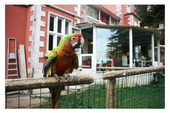 Quinta das Murtas: попки и веранда с завтраком