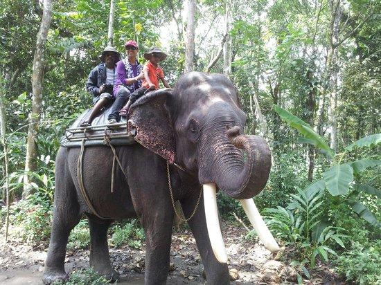 Club Mahindra Thekkady : Elephant ride