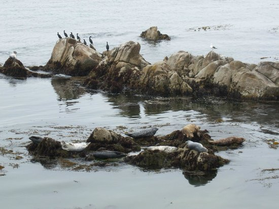 Monterey Peninsula Recreational Trail: Seals and sea birds