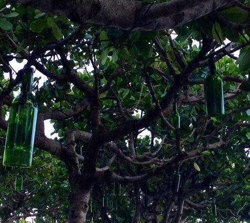 The Modern Honolulu : cool bottle light decos on banyan trees at pool
