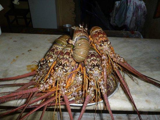 Pousada La Goduria: Le famose Aragoste di praja Redonda(a 30 km sud di Canoa)