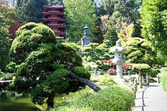 Giardini curati foto di japanese tea garden san - Giardini curati ...
