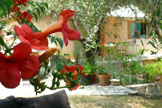 Les Cypres: Le jardin, un petit coin de paradis soigneusement entretenu