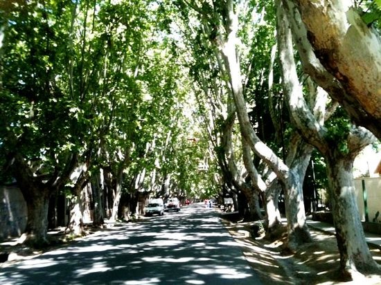 Posada El Encuentro: Beautiful tree lined street around the corner