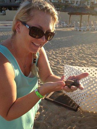 Solmar Resort : Katie holding a baby Sea Turtle