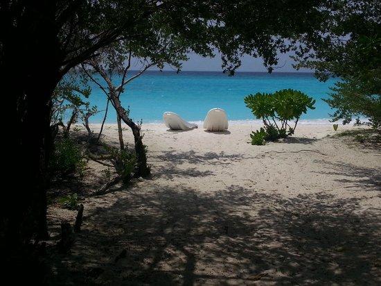 Palm Beach Resort & Spa Maldives : Vue de la chambre