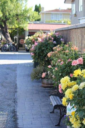 Almond Court Motel : beautiful roses