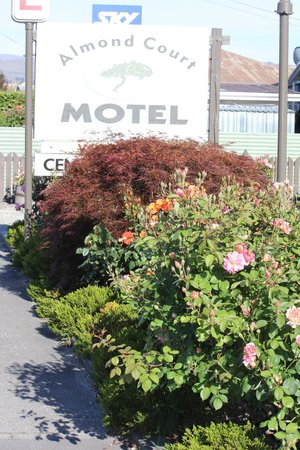 Almond Court Motel : the main entrane and another bed of well managed roses