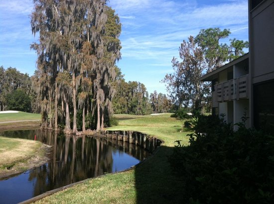 Saddlebrook Resort Tampa: view from our room