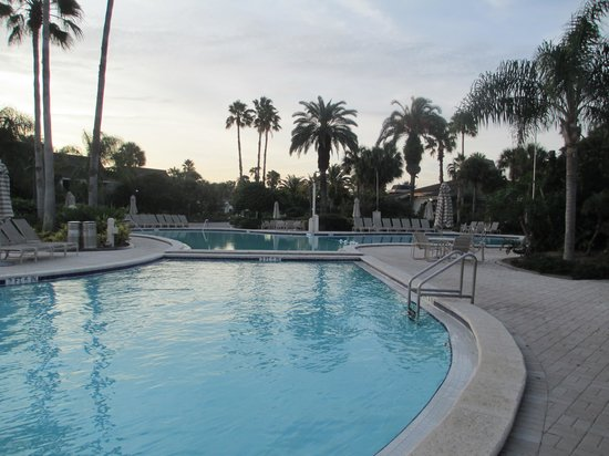 Saddlebrook Resort Tampa : pool