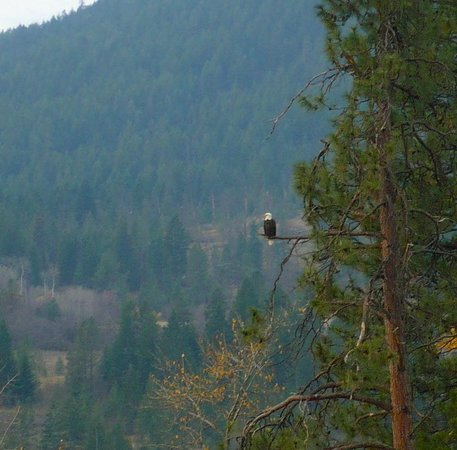 Quaaout Lodge & Spa at Talking Rock Golf Resort: Eagle watching, photo JB