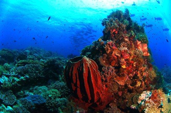 Patuno Resort Wakatobi: Coral reef
