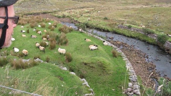 Clew Bay Bike Hire and Outdoor Day Adventures : Water, sheep and pasture - very common and pleasing sight on the trail