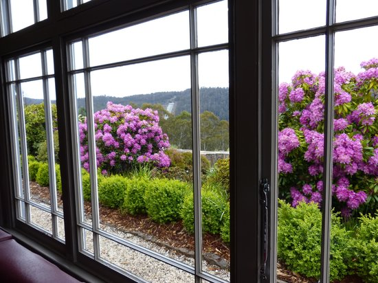 Tarraleah Estate : Rhododendrons from the lodge