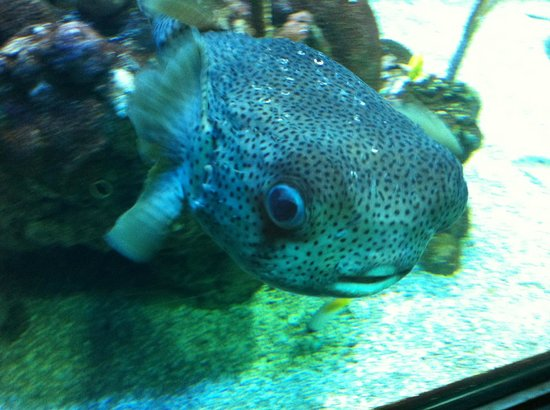 Seattle Aquarium : Checking me out
