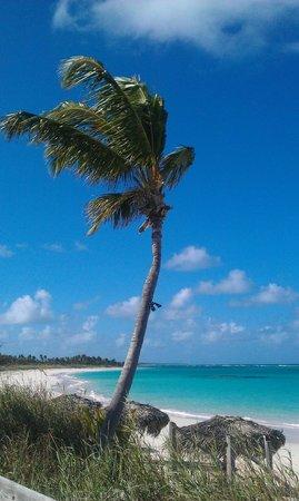 Pineapple Fields Resort : Beach in front of Tippy's
