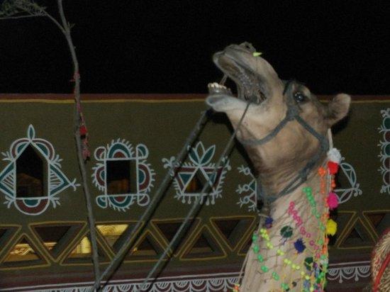 Chokhi Dhani Restaurant: the camel