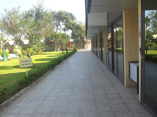 Oasis Hotel: Lawn