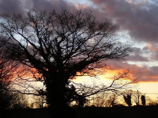 Le Saint, France : Coucher de soleil sur un chêne centenaire