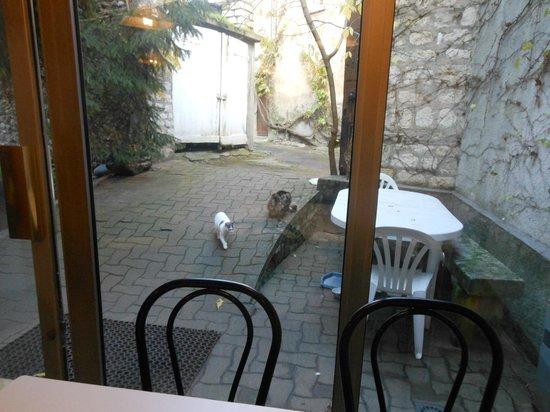 Jackotel : vue du jardin de la salle du petit déjeuner