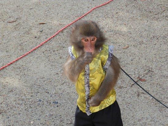 Kunenan: 猿