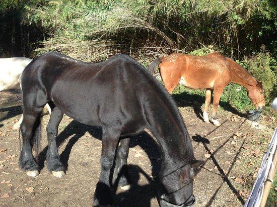 Le Mas Saint Florent : Le chevaux derrière le Mas