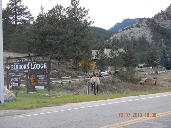 Murphy's River Lodge: Picture of Elk right across the street.