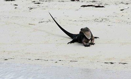 Exuma Water Sports: Endangered Exuma Rock Iguanas