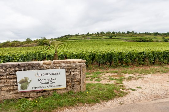 Burgundy Wine School: One of the most expensive wine areas
